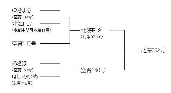 北海302号(夢味心)系譜